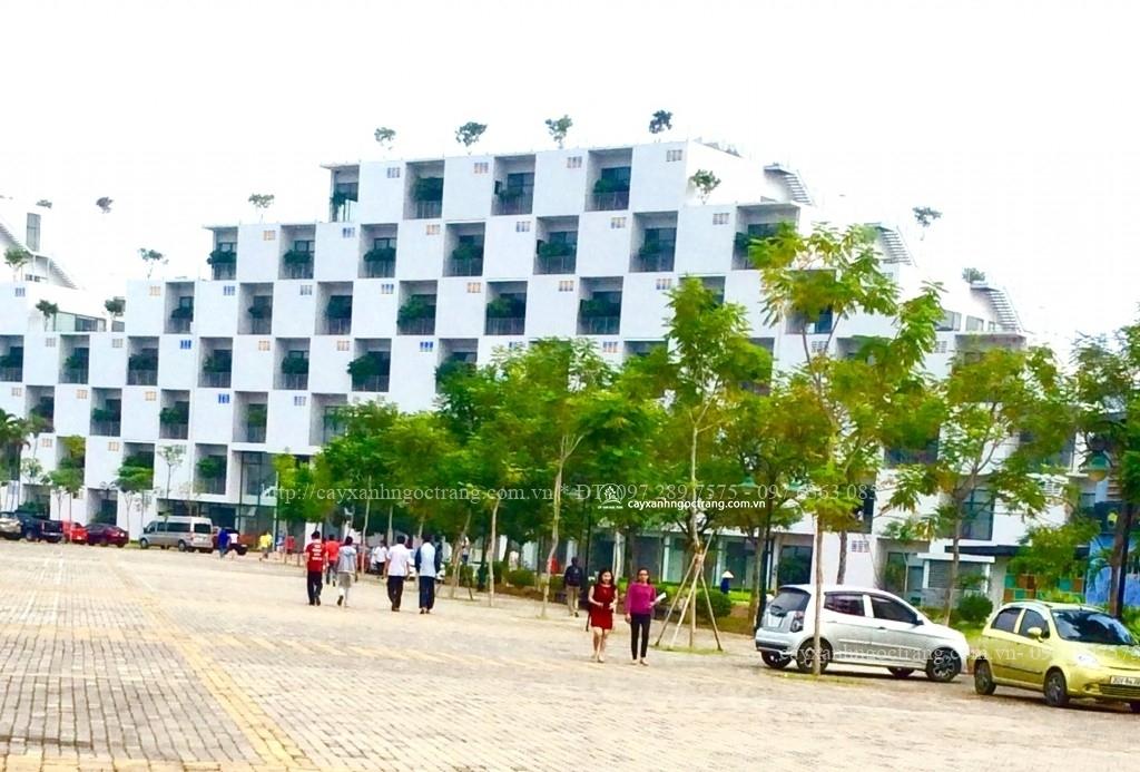 cây xanh trồng tại ĐH FPT