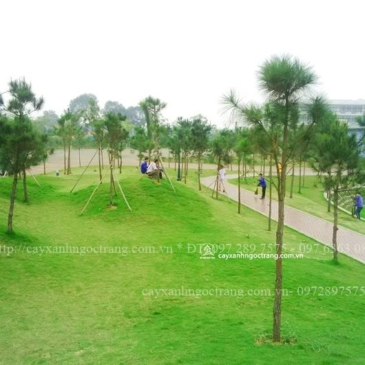 cây xanh và thảm cỏ tại ĐH FPT