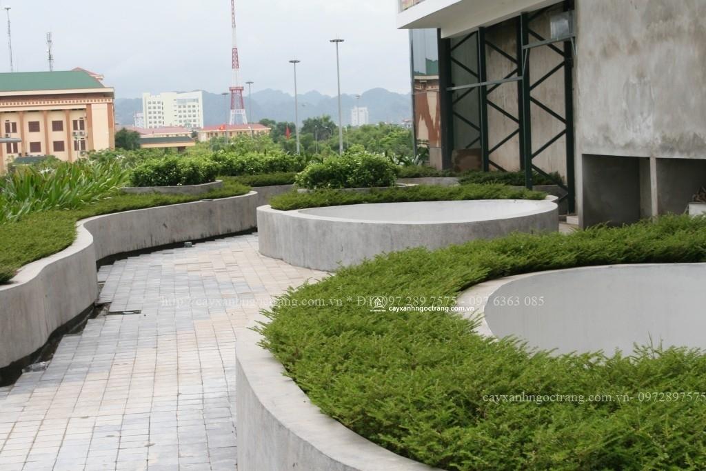 cây cẩm tú mai được trồng tại khách sạn đa năng ninh bình
