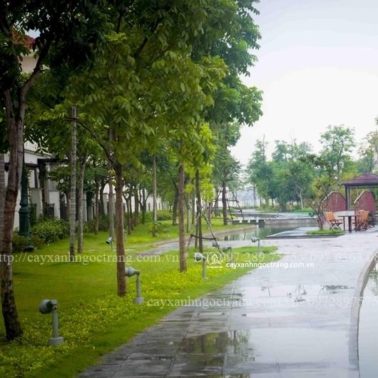 cây xanh trồng tại công trình đô thị